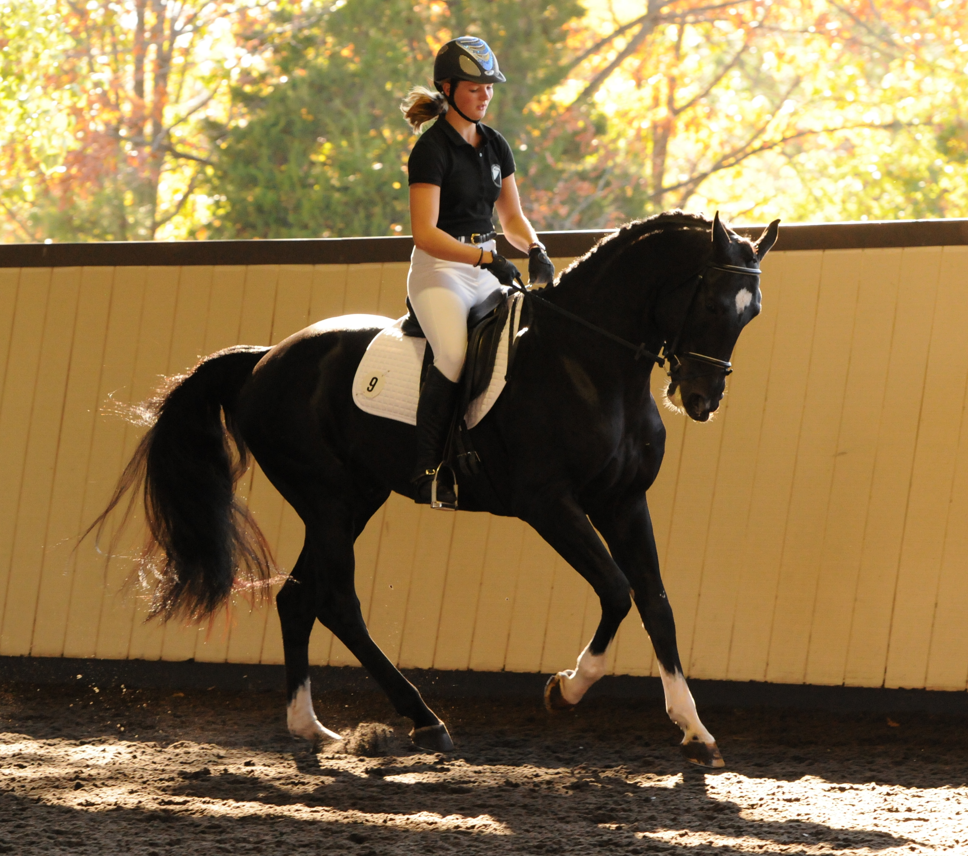 Balanchine Right Canter