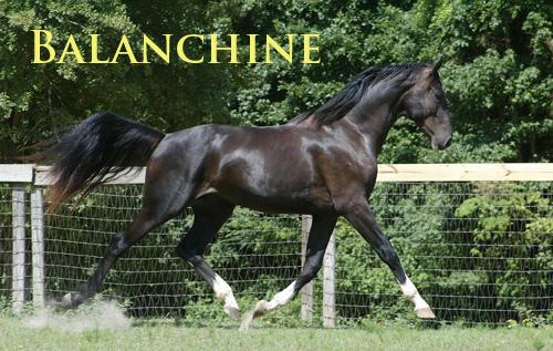 balanchine1